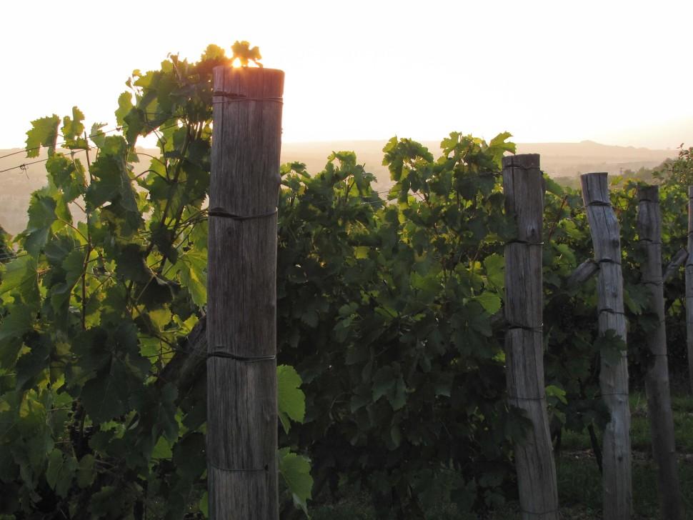 vinohrad zapad ruzeny