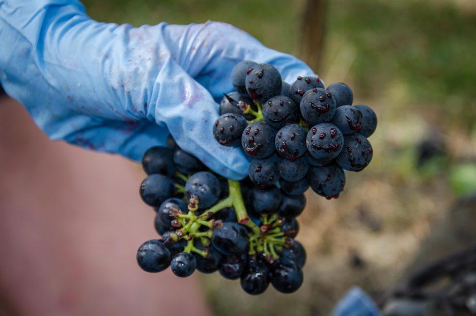 Hrozen víno smajlík