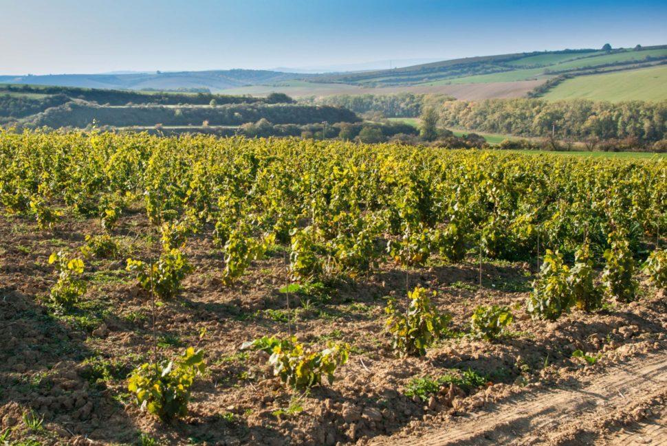 Vinohrad Kurdějov Díly
