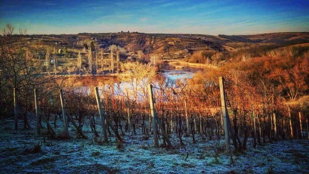 vinohrad zima sedlacek kurdejov